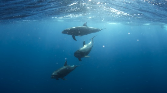 Where can I swim with dolphins in Mexico